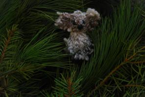 Miś zamieszkuje w lesie